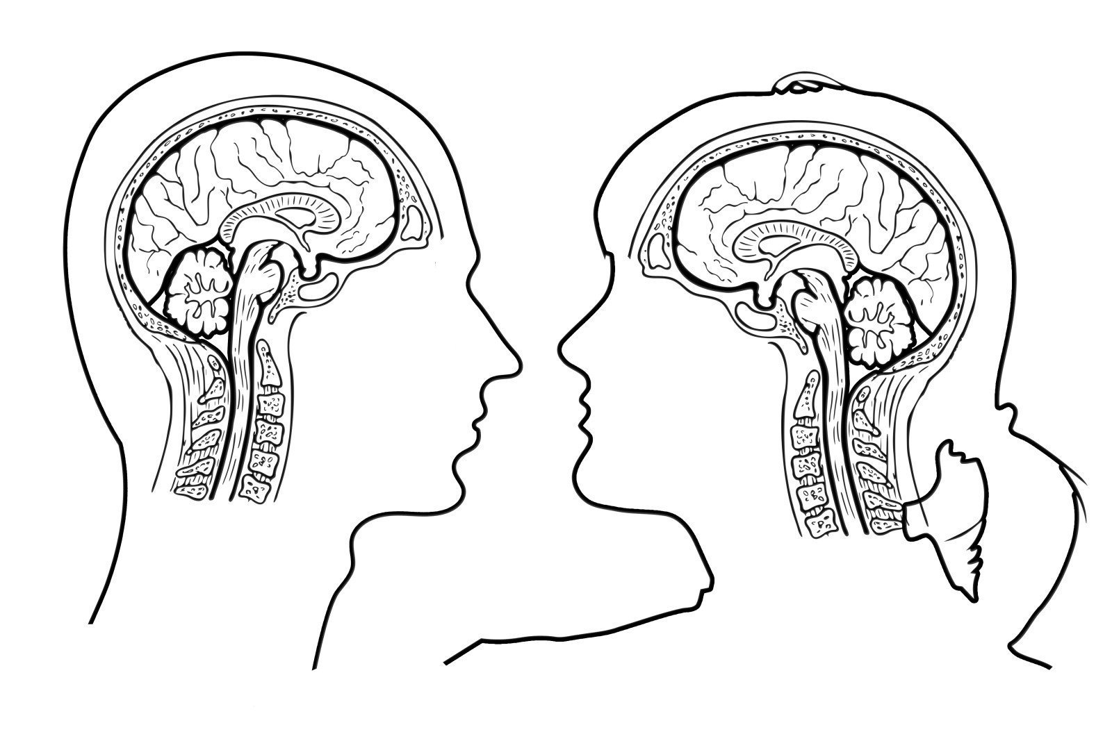 How to relieve stress and anxiety: Illustration that shows an outline of a male and female brain