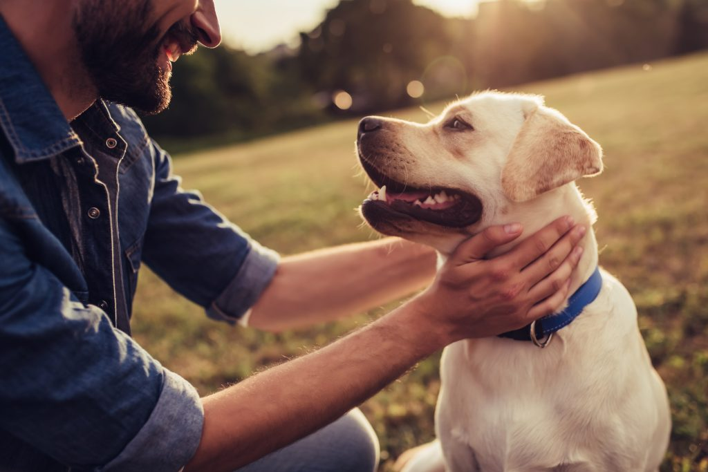 Habits of mind: Image of a man playing with his dog outdoors